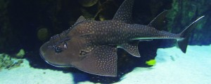 Shark Ray Feed
